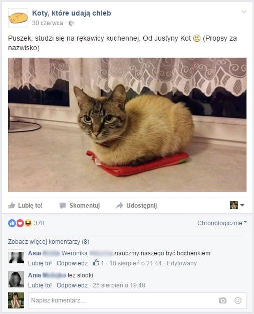 Koty na Facebooku. Jak zdobyć lajki na Facebooku?