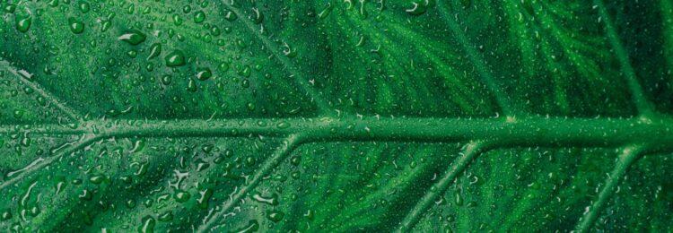 Evergreen content – czym są wiecznie żywe treści?