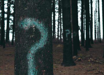 Obawy przed SEO – dlaczego przedsiębiorcy boją się inwestować w pozycjonowanie?